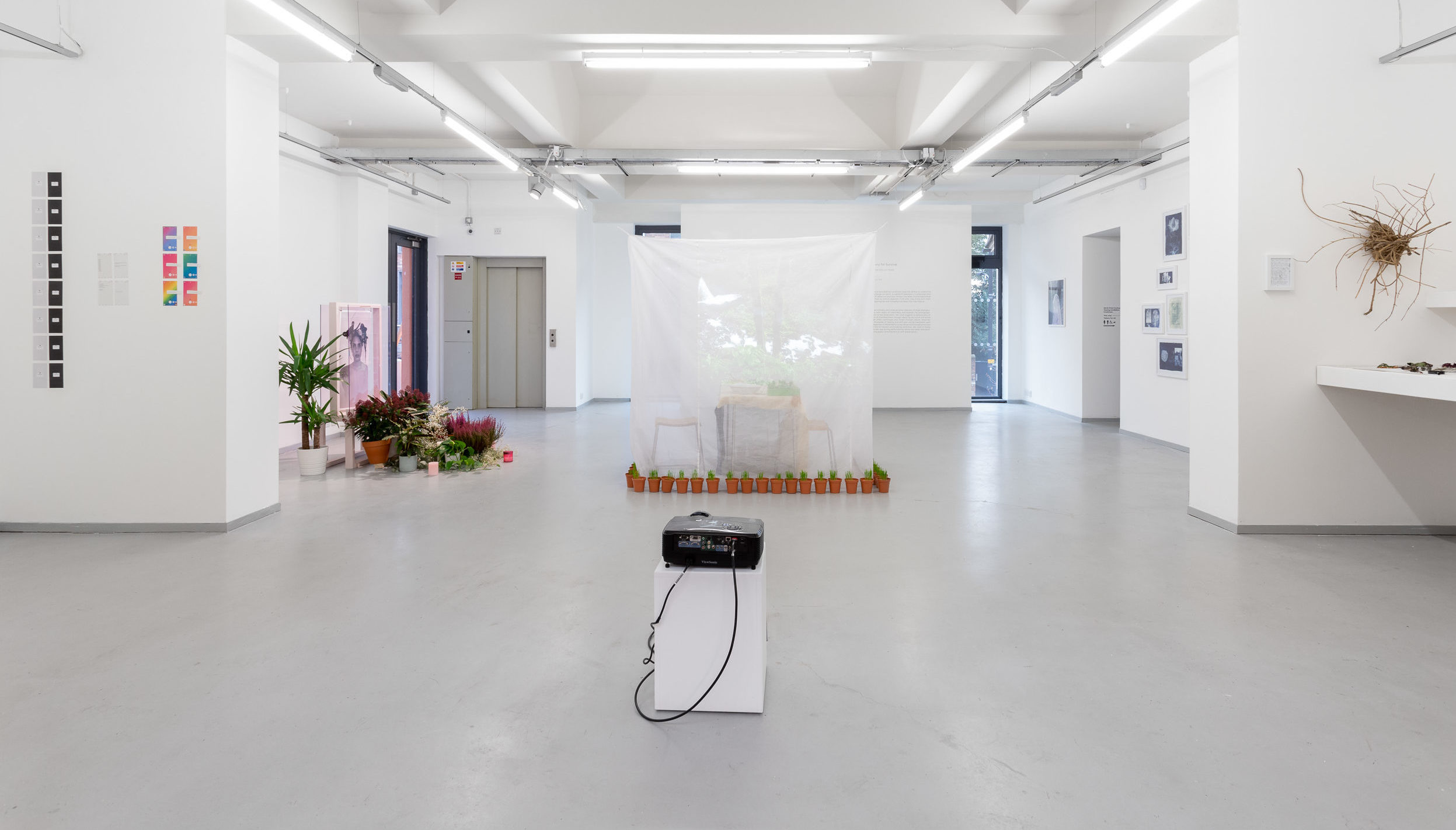 Art House exhibition space displaying A Laboratory for Survival, Cole Ndelu and Dimple B. Shah, ROSL Residency, November 2019, Credit Jules Lister